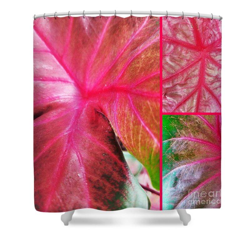 Caladium Red Trio Shower Curtain featuring the photograph Caladium Red Trio by Maria Urso