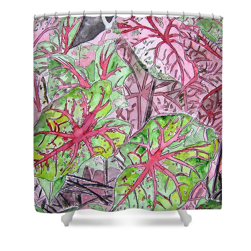Watercolour Shower Curtain featuring the painting Caladiums Tropical Plant Art by Derek Mccrea
