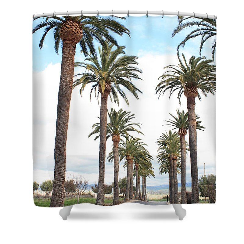 Palm Trees Shower Curtain featuring the photograph California Dreaming by Carol Groenen
