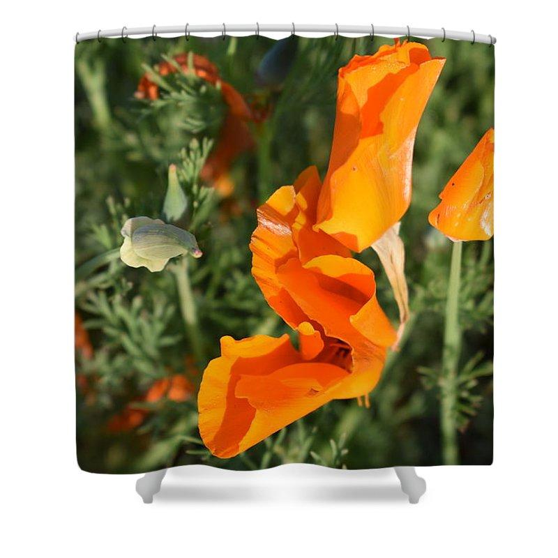 California Poppy Shower Curtain featuring the photograph California Morning by Cheryl Calhoun
