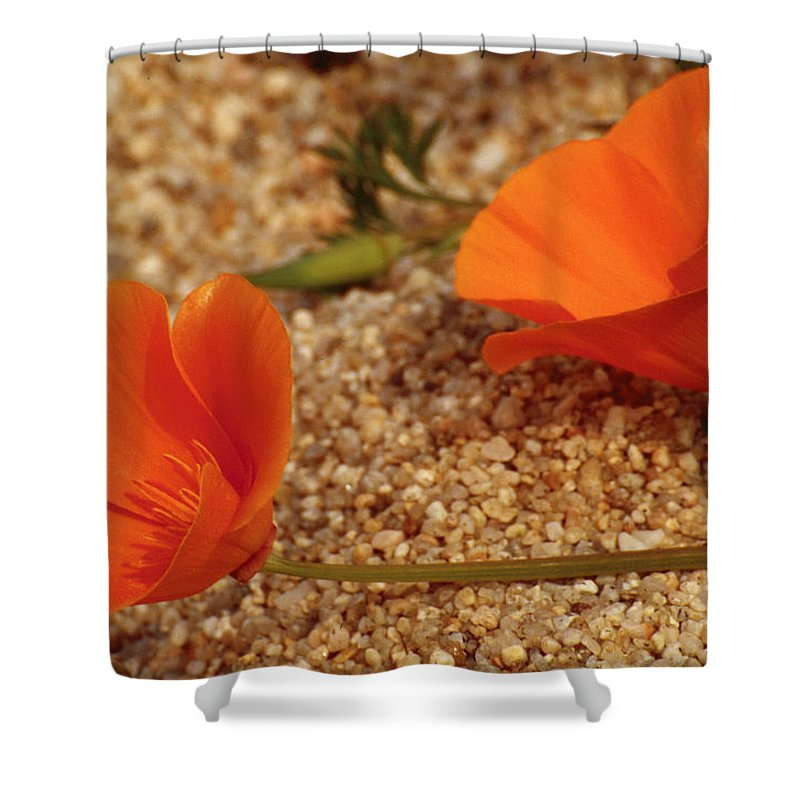 Poppy Shower Curtain featuring the photograph California Poppies by Karen Ulvestad