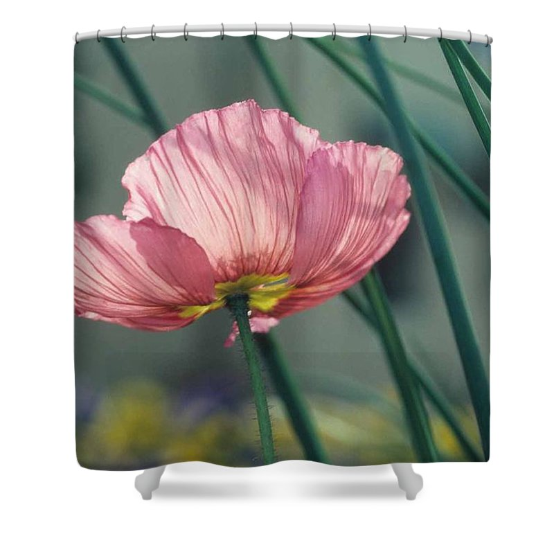 California Poppy Shower Curtain featuring the photograph California Poppy by Laurie Paci
