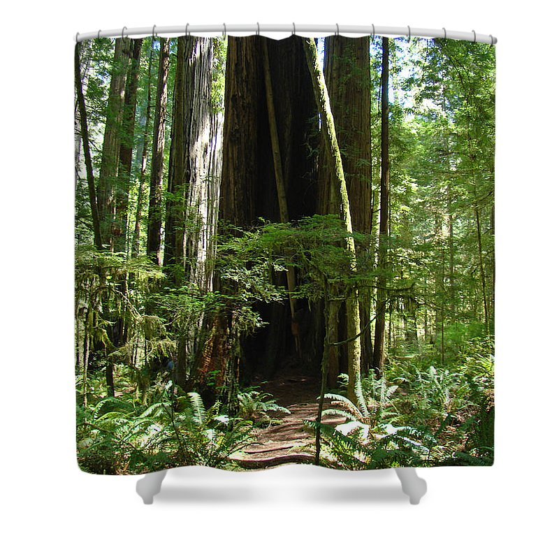 Redwood Shower Curtain featuring the photograph California Redwood Trees Forest Art by Baslee Troutman