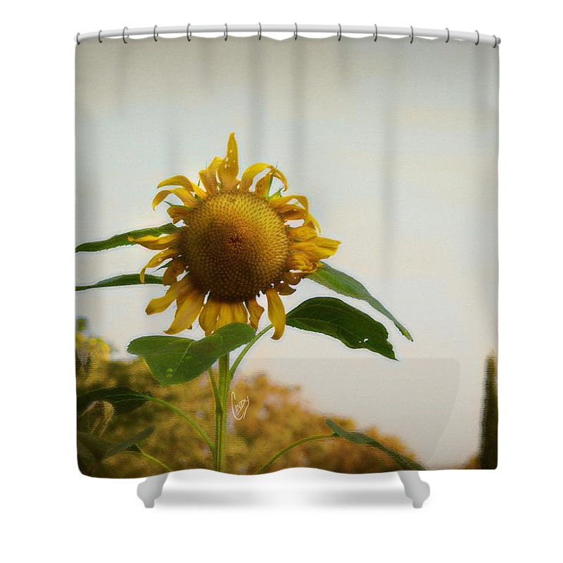 Sunflower Shower Curtain featuring the photograph Californian Tuscany by Cindy Garber Iverson
