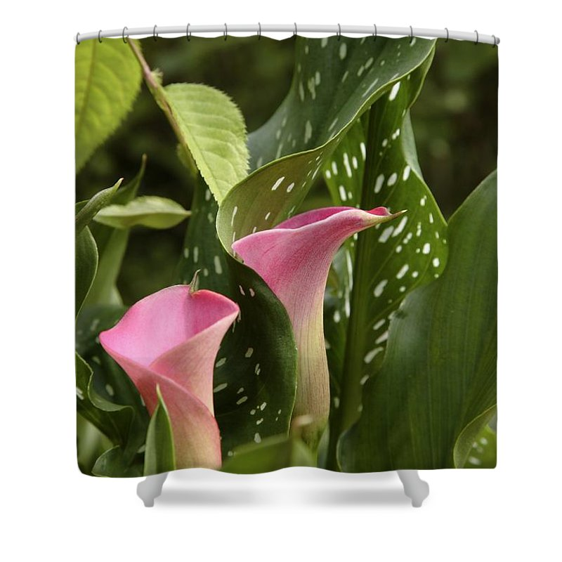 New England Shower Curtain featuring the photograph Calla Lilies by Erin Paul Donovan