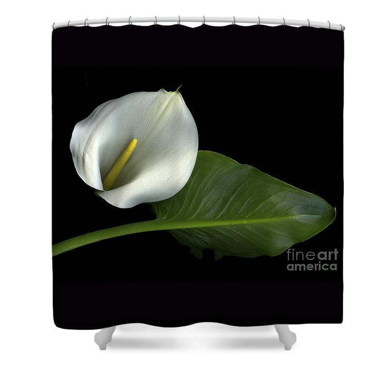 Scanography Shower Curtain featuring the photograph Calla Lily by Christian Slanec