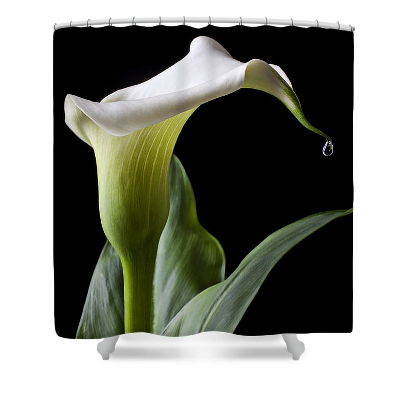 Calla Lily Shower Curtain featuring the photograph Calla Lily With Drip by Garry Gay