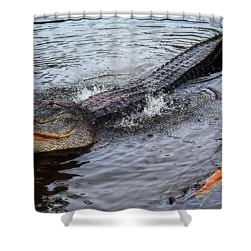 Alligator Shower Curtain featuring the photograph Calling For A Date by Christopher Holmes
