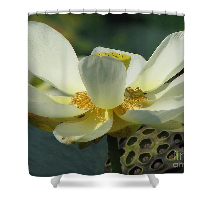 Lotus Shower Curtain featuring the photograph Calm by Amanda Barcon