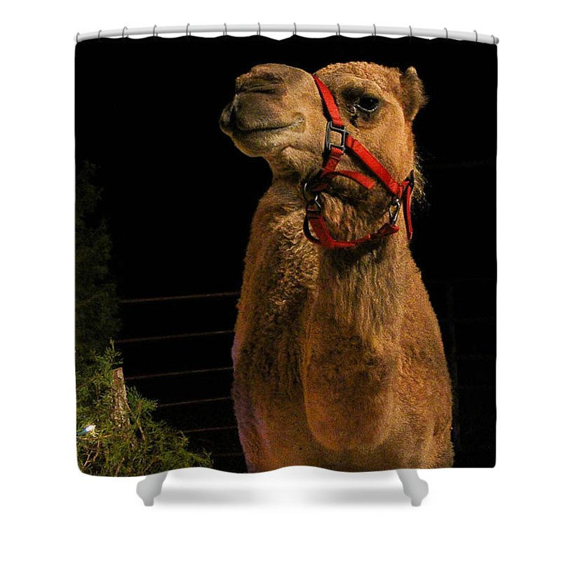 Camel Front View Shower Curtain For Sale By Jessica Fronabarger