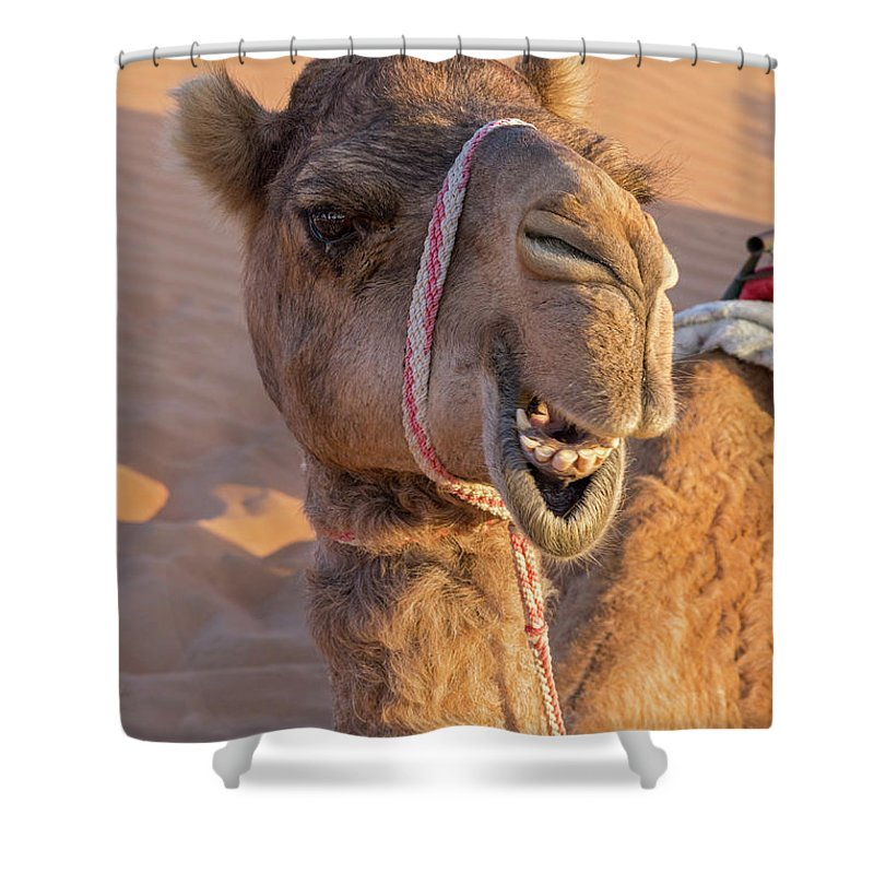 Camel Shower Curtain Featuring The Photograph Funny By Ulysse Pixel