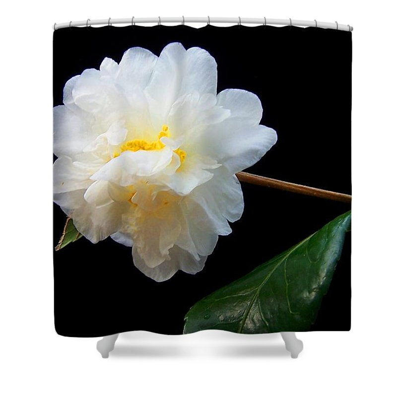 Camelia Shower Curtain featuring the photograph Camelia Trio by Laurie Paci