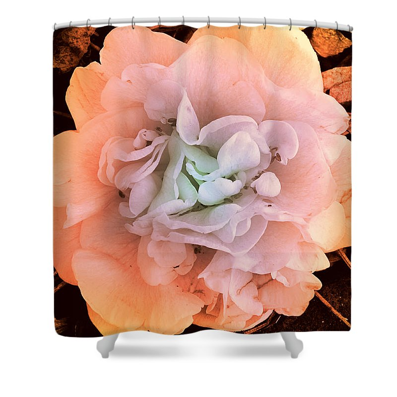 Photography Shower Curtain featuring the photograph Camellia Bloom by Susanne Van Hulst