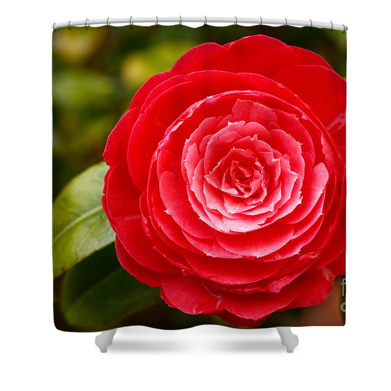 Azores Shower Curtain featuring the photograph Camellia Japonica by Gaspar Avila