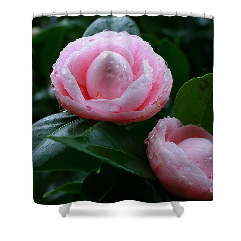 Bloom Shower Curtain featuring the photograph Camellias by Gaspar Avila
