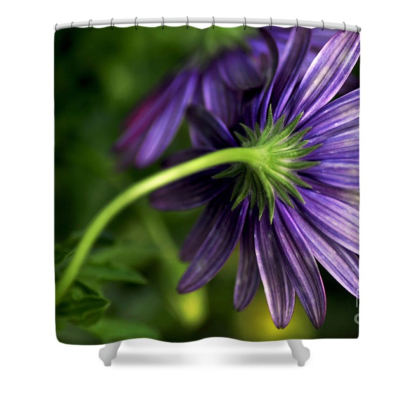 Photography Shower Curtain featuring the photograph Camera Shy Daisy by Kaye Menner