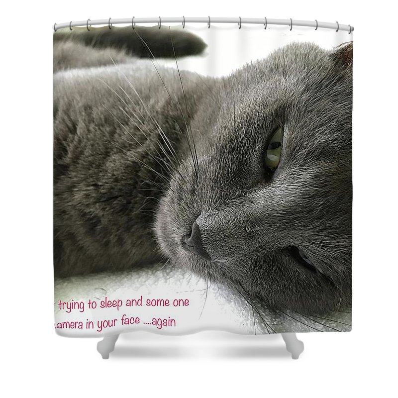 Cat Shower Curtain featuring the photograph Resting Face by Debbie Cundy
