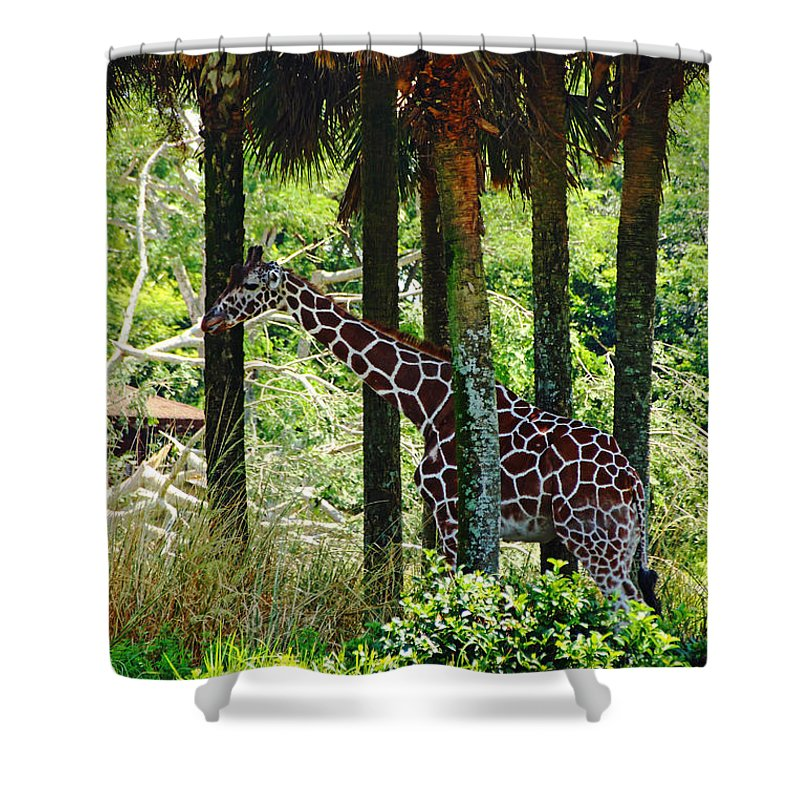 Giraffe Shower Curtain featuring the photograph Camouflage Coat by Debbie Oppermann