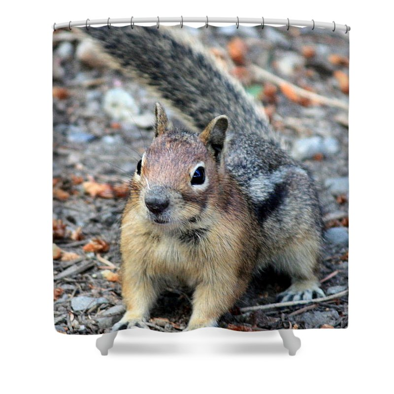 Chipmunk Shower Curtain featuring the photograph Campground Chipmunk by Carol Groenen