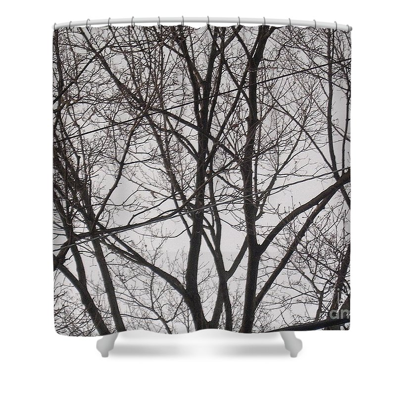 Tree Shower Curtain featuring the photograph Campus Sky by Meghann Brunney