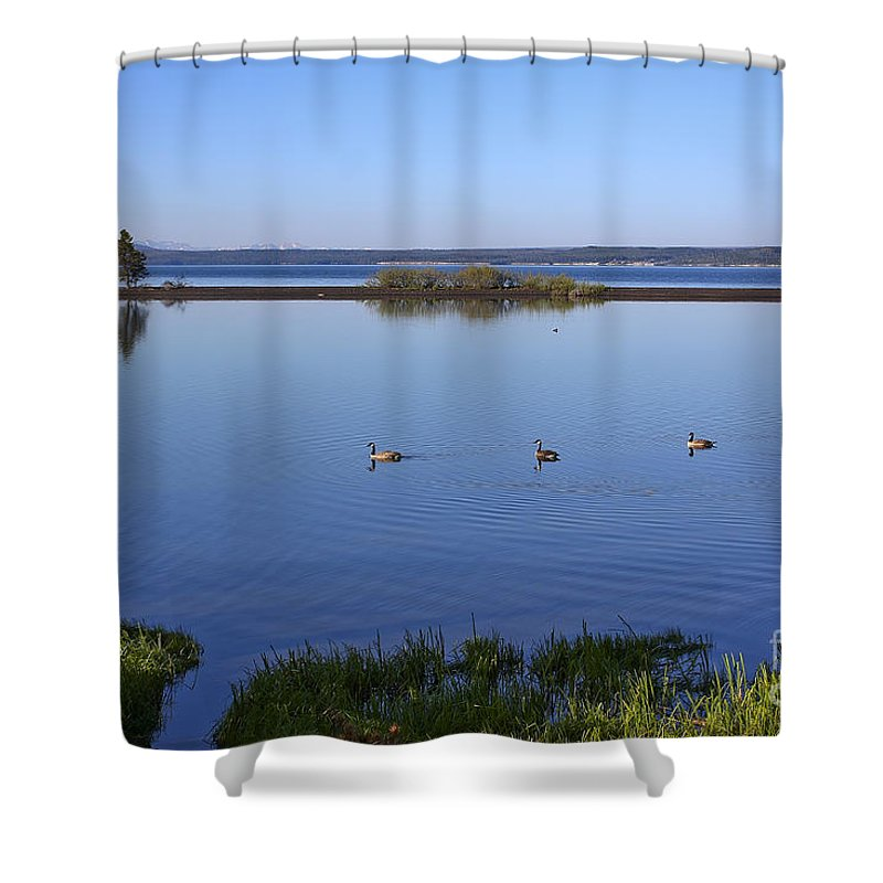 Yellowstone Lake Shower Curtain featuring the photograph Canada Geese On Yellowstone Lake by Teresa Zieba