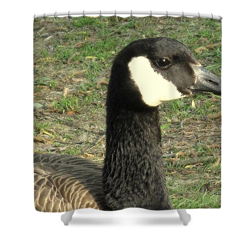 Canada Shower Curtain featuring the photograph Canada Goose by Ian MacDonald