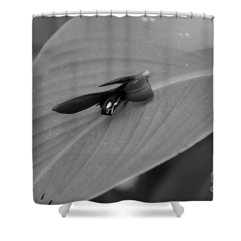 Shower Curtain featuring the photograph Canna In Black And White by Kitrina Arbuckle