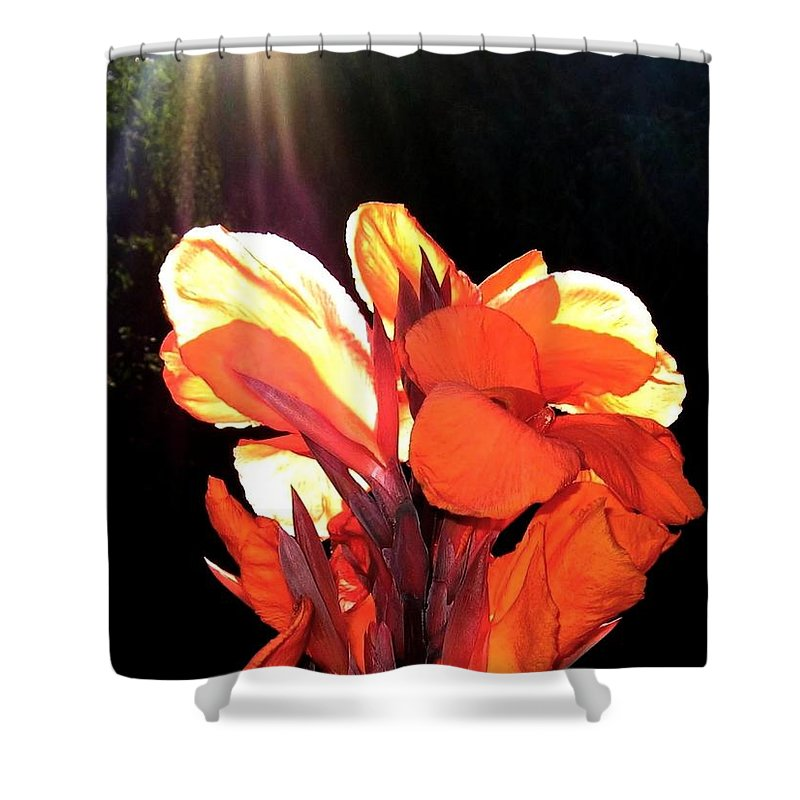 Canna Lily Shower Curtain featuring the photograph Canna Lily by Will Borden