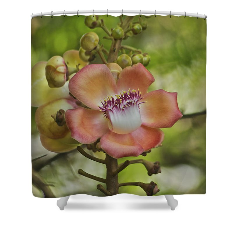Flower Shower Curtain featuring the photograph Cannonball Blossom by Michael Peychich