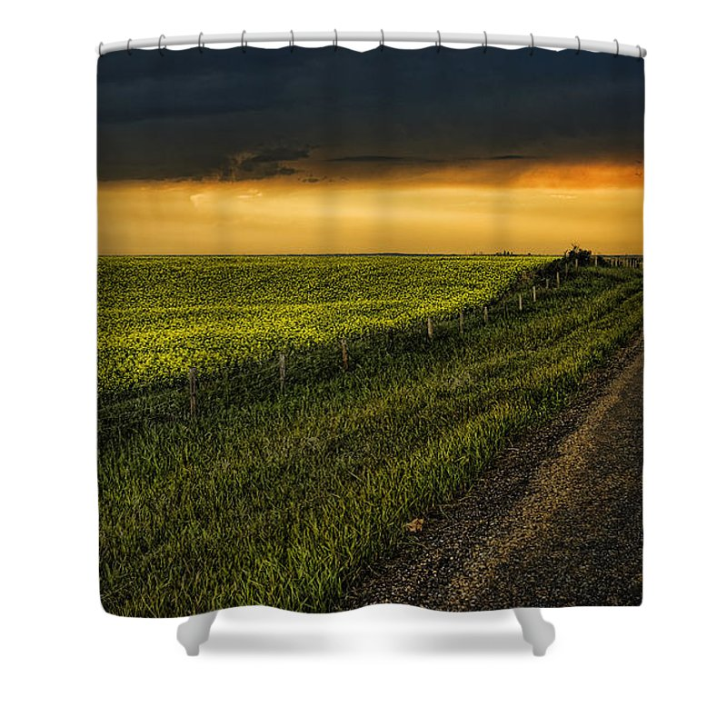 Canola Shower Curtain featuring the photograph Canola and the Road Ahead by Wayne Sherriff