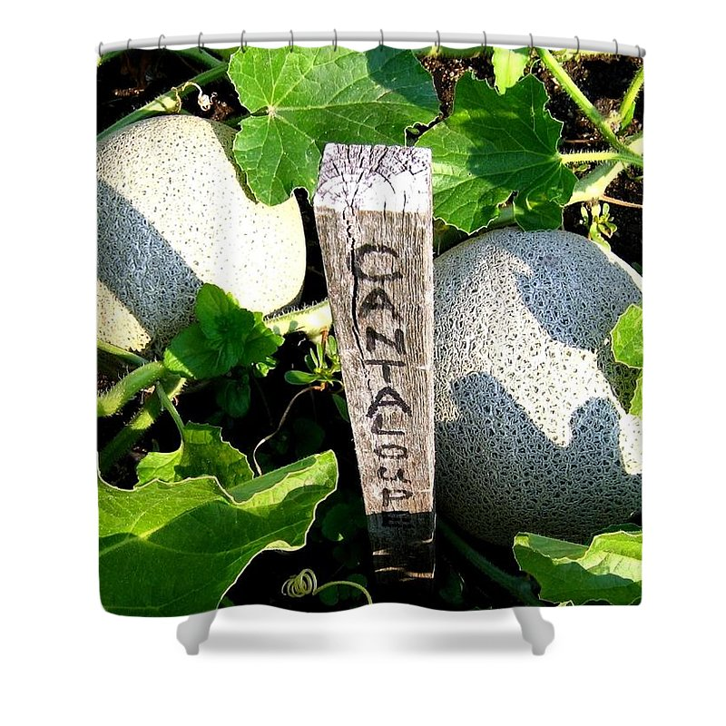 Cantaloupe Shower Curtain featuring the photograph Cantaloupe by Will Borden
