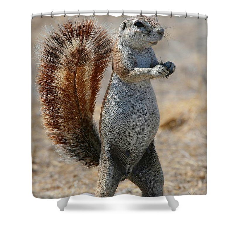 Squirrel Shower Curtain featuring the photograph Cape Ground-squirrel by Bruce J Robinson