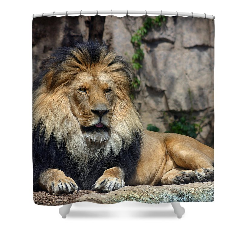 Lion Shower Curtain featuring the photograph Captive Pride by Anthony Jones