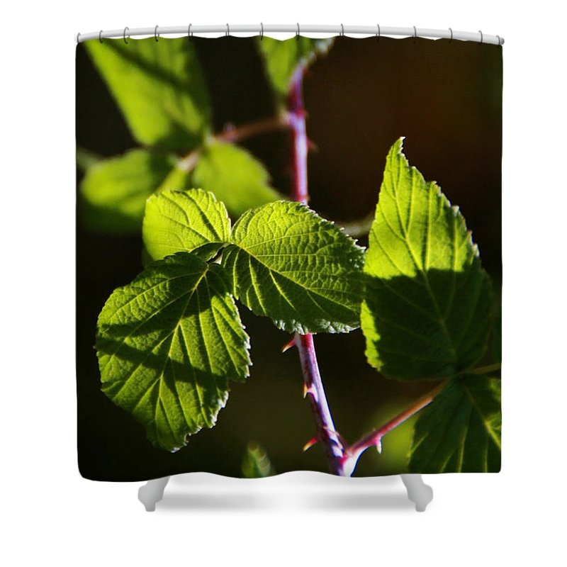 Vine Shower Curtain featuring the photograph Captured In Morning Light by Linda Shafer