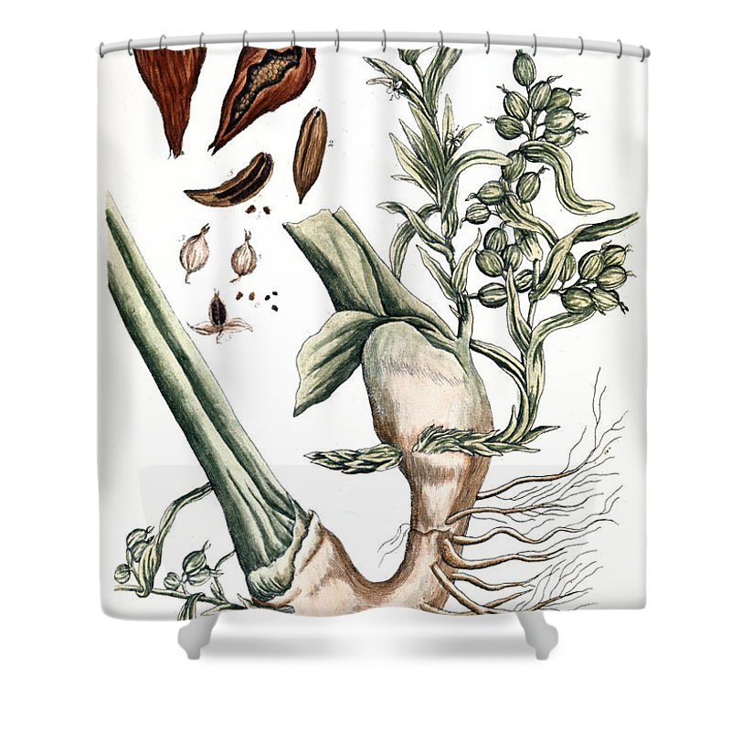 1730s Shower Curtain featuring the photograph Cardamom, 1735 by Granger