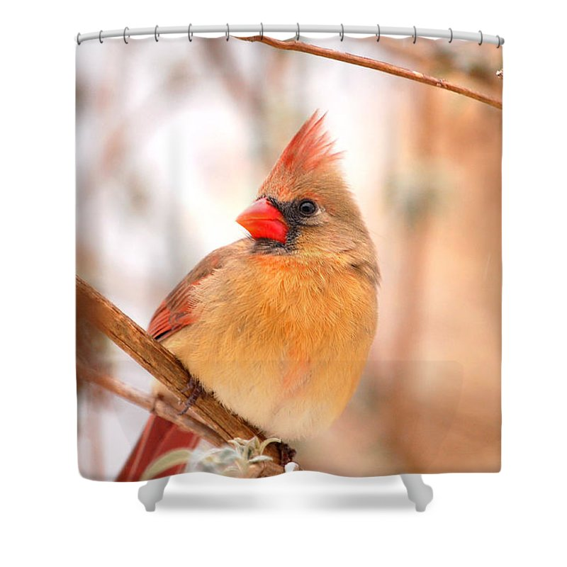 Landscape Shower Curtain featuring the photograph Cardinal Bird Female by Peggy Franz