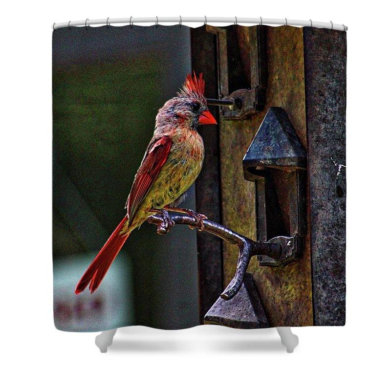Cardinal Shower Curtain featuring the photograph Cardinal by Haniet Cordovi