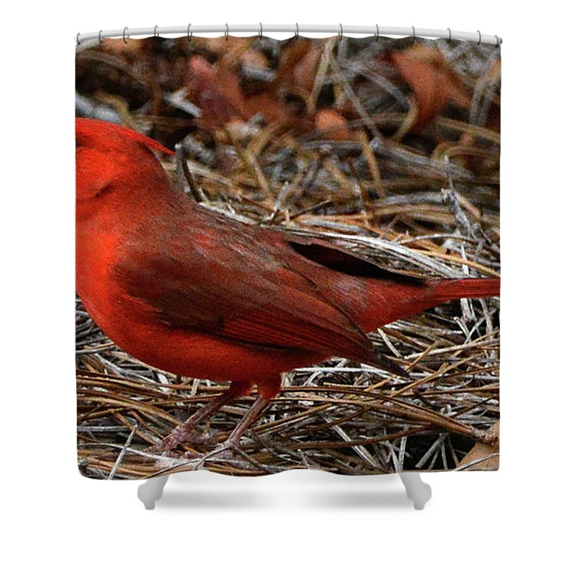 Cardinal Shower Curtain featuring the photograph Cardinal On Pine Straw by Jerry Griffin