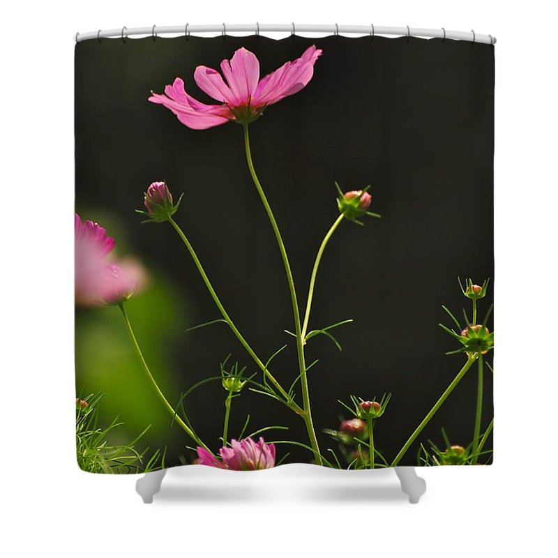 Flowers Shower Curtain featuring the photograph Care Free by Donna Shahan