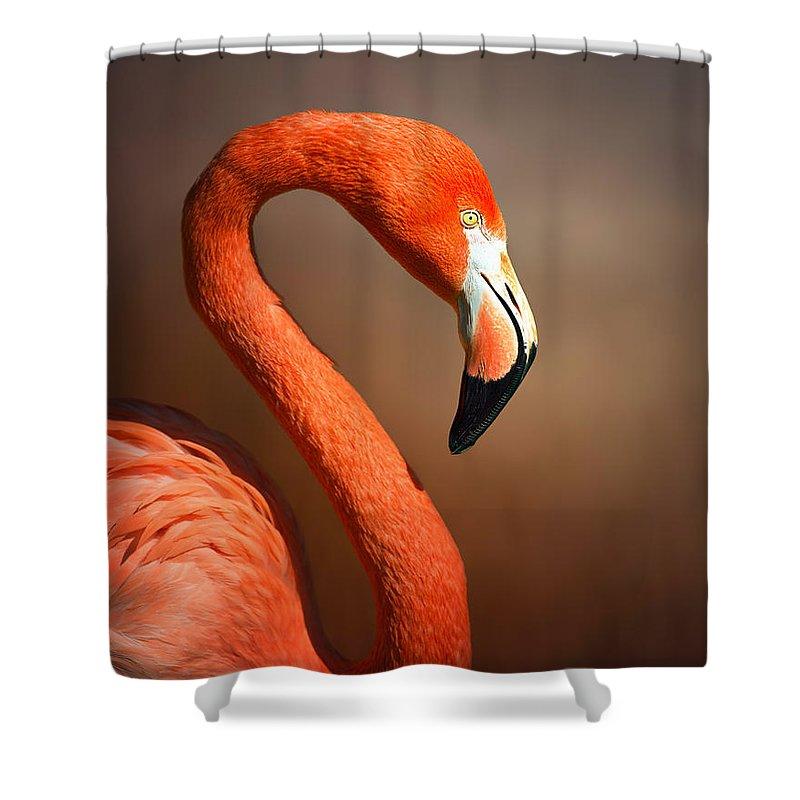 Flamingo Shower Curtain featuring the photograph Caribean Flamingo Portrait by Johan Swanepoel