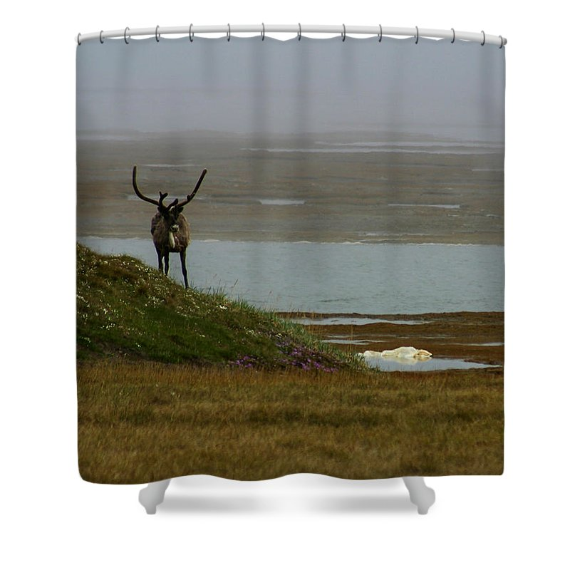 Caribou Shower Curtain featuring the photograph Caribou Fog by Anthony Jones