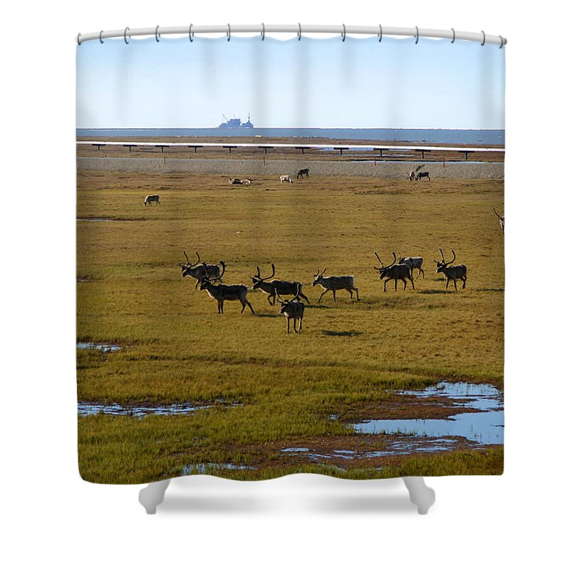 Caribou Shower Curtain featuring the photograph Caribou Herd by Anthony Jones