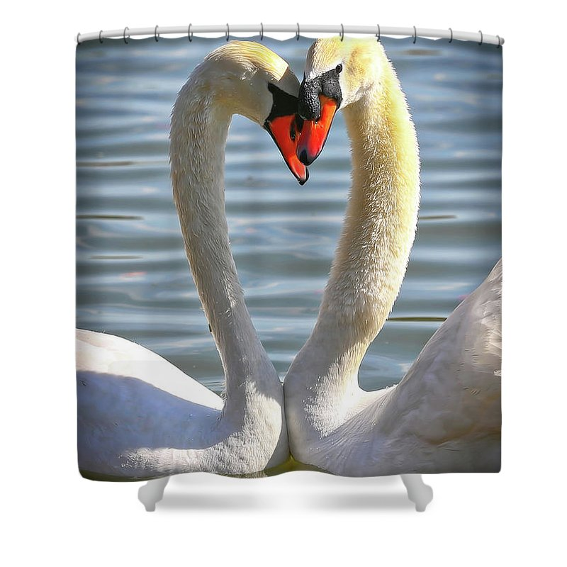 Swans Shower Curtain featuring the photograph Caring Swans by Carol Groenen