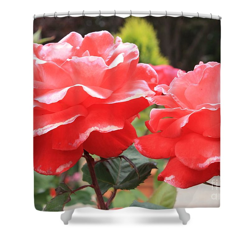 Carmel Mission Shower Curtain featuring the photograph Carmel Mission Roses by Carol Groenen