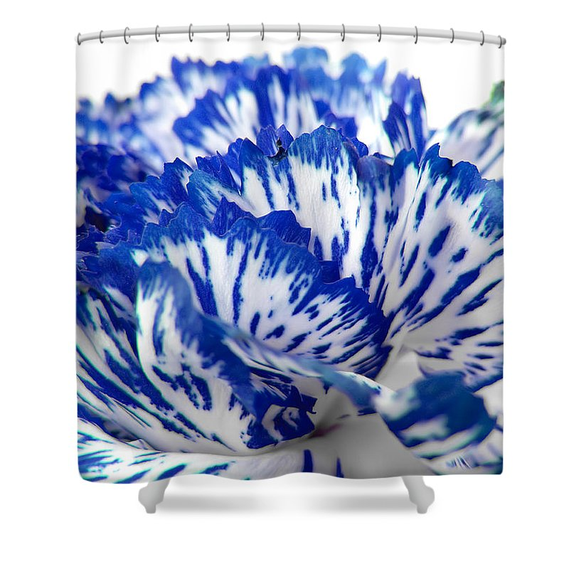 Carnation Shower Curtain featuring the photograph Carnation by Daniel Csoka