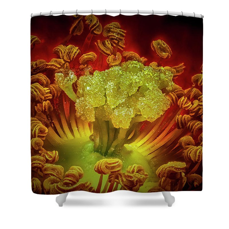Macro Shower Curtain featuring the photograph Carpet Rose Center by Robert Storost