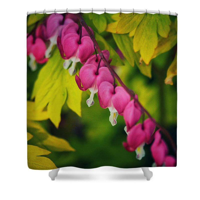 Connie Handscomb Shower Curtain featuring the photograph Cascading Light by Connie Handscomb