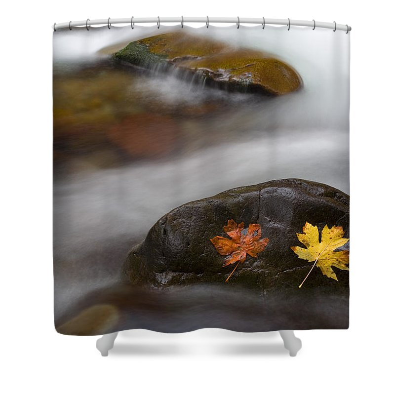 Leaves Shower Curtain featuring the photograph Castaways by Mike Dawson