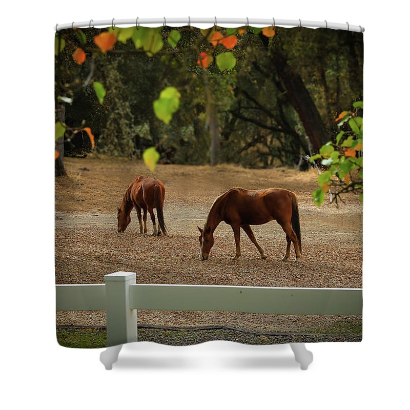 Horse Shower Curtain featuring the photograph Casual Afternoon by Lois Reed