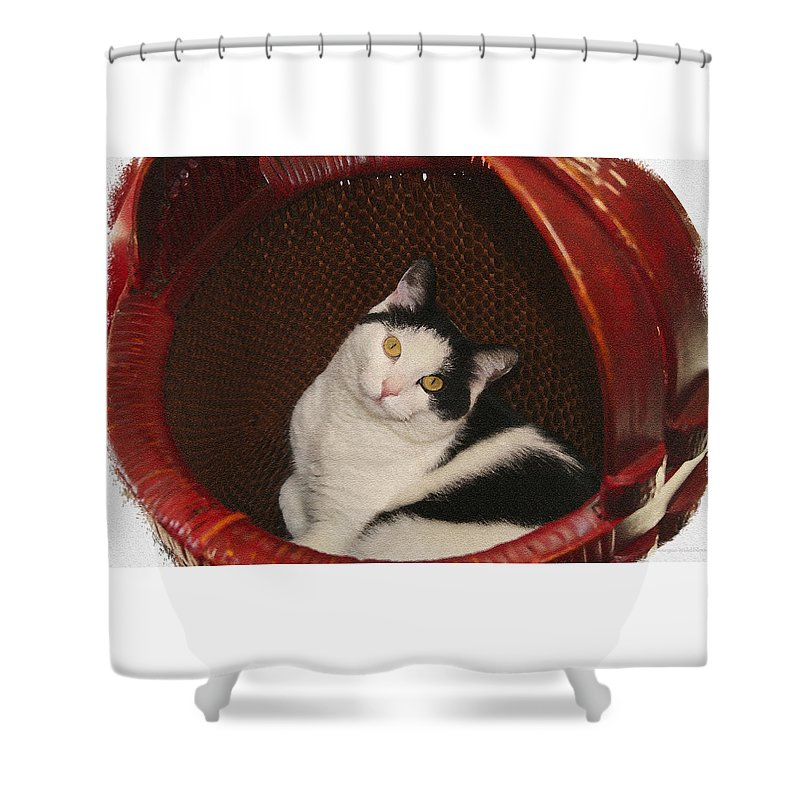 Cat Shower Curtain featuring the photograph Cat In A Basket by Margie Wildblood